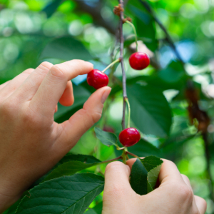 "You Can't ""Cherry Pick"" Agile Projects"